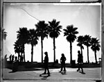 Venice Boys