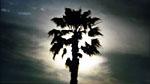 Black Palmtree