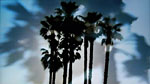 Black Palmtrees