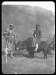 On a yak