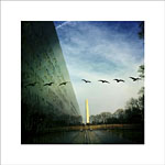 Geese Over Vietnam Memorial