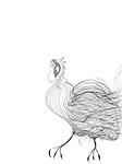 Rooster Strut