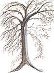 Versailles Tree